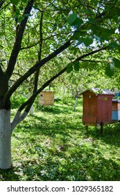 Wooden beehive in the village. Wonderful weather in summer, early morning in the garden, bees flying around. Green nature in rural area.