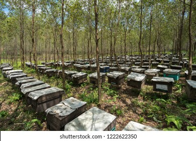 Wooden beehives in the forests in Vietnam