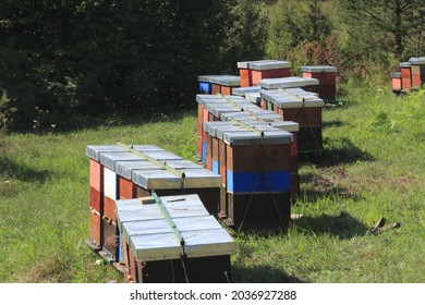 Wooden beehives on a meadow, bees visible above the hives.