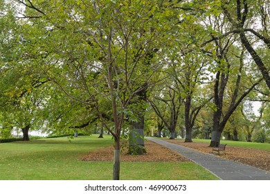 A wooden bench along the path with fallen leaves at Flagstaff Gardens, the oldest park in Melbourne, Victoria, Australia during Autumn season