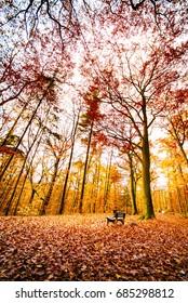 Wooden bench in autumn forest, Niederwald landscape park, Rüdesheim am Rhein, Hesse, Germany