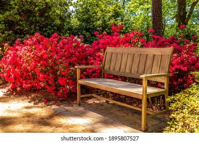 Wooden bench in the azalea garden