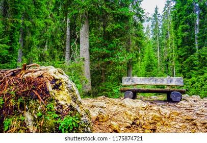 Wooden bench in deep forest landscape. Deep forest wooden bench view. Forest bench scene. Wooden bench deep forest