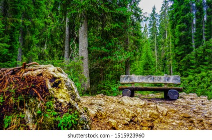 Wooden bench in deep forest. Forest wooden bench view. Forest wooden bench landscape. Wooden bench in forest
