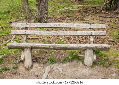 Wooden bench in the forest