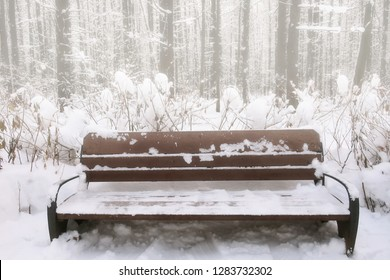 Wooden bench in the forest Park. Winter, snow-covered forest