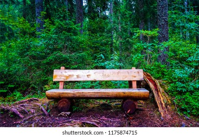 Wooden bench in forest scene. Forest bench view. Deep forest wooden bench landscape. Bench forest