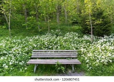 wooden bench at idyllic place in forest and meadow