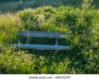 Wooden bench in meadow with tall grass