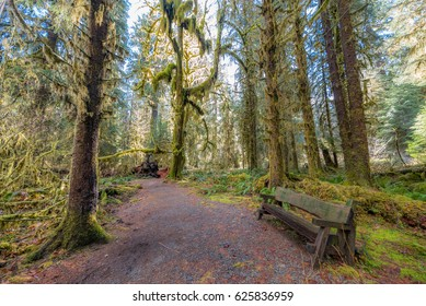 Wooden bench on a background of the rainforest. Hoh Rain Forest, Olympic National Park, Washington state, USA