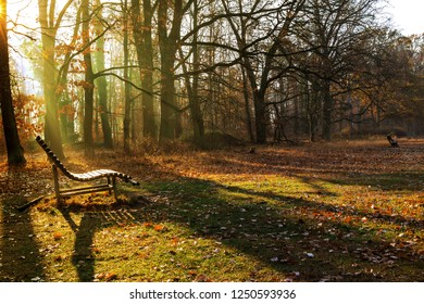 Wooden Bench on a Forest meadow