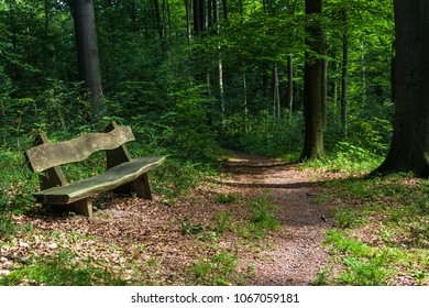 Wooden bench on a narrow forest path