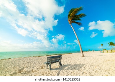 Wooden bench and palm tree by the sea in Florida Keys. Southern Florida, USA