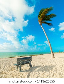 Wooden bench and palm tree in Florida Keys. Southern Florida, USA