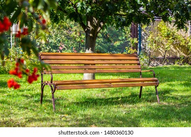 wooden bench in a park or garden on a background of green trees
