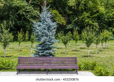 Wooden bench in park with pine tree at background