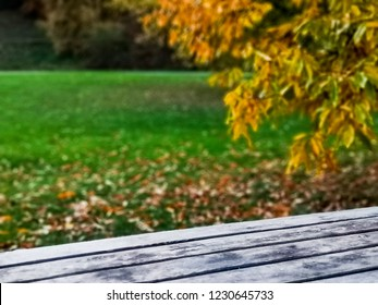 Wooden bench placed next to a tree with yellow fallen leaves at the Botanical Garden in Aarhus Denmark. Photo captured in autumn season.
