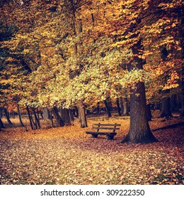 Wooden bench under autumn oak tree
