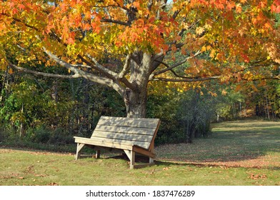 Wooden bench under a brightly colored maple tree in Washington, New Hampshire