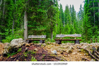 Wooden benches in deep forest. Deep forest wooden benches view. Forest wooden benches scene. Wooden benches in forest