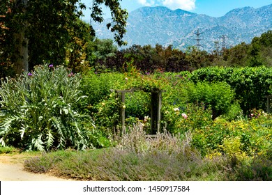 Wooden benches nestled among the cardoon, lavender and other Mediterranean plants growing in a lush California garden with mountain views in the background.
