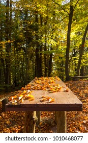 Wooden benches and table covered in autumn leafs