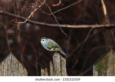 wooden bird Goldcrest on the wooden fence/spring concept