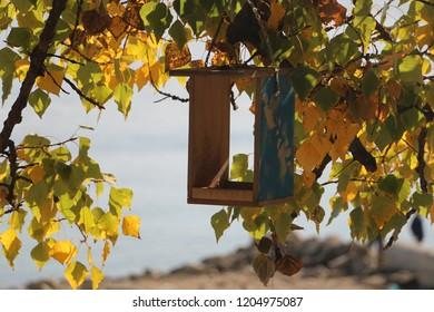 Wooden bird house in autumn time