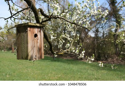 Wooden bird house in spring time
