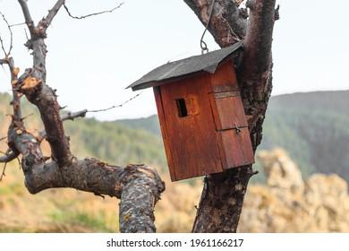 Aves de madera colgando de un árbol