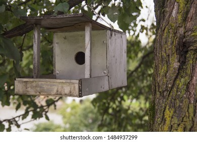 wooden birdhouse (nesting box) located on the tree in park or in forest or in Nature reserve