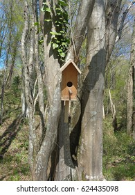 Wooden birdhouse on tall tree in sunny forest