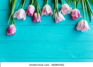 Wooden blue background and pink tulips. Conception holiday, March 8, Mother's Day.