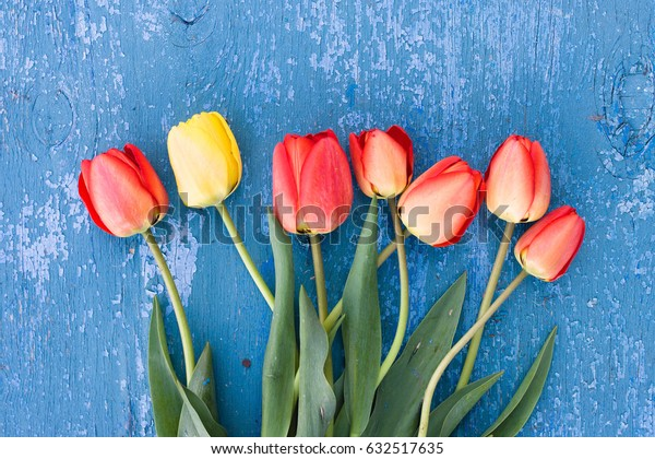 Wooden blue background and red tulips. Beautiful flowers on antique texture. Feast of the concept, March 8, Mother's Day
