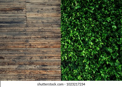 Wooden board and green leaves. Rustic style