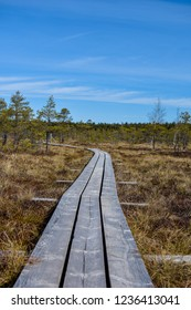 Wooden boards trail, path through the swamp, bog, pine forest at the Kemeri National Park, Nature reserve, Latvia