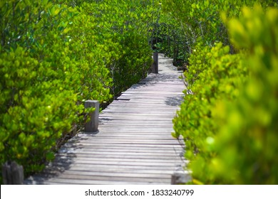 Wooden boardwalk among the mangrove forest, Rayong province, Thailand