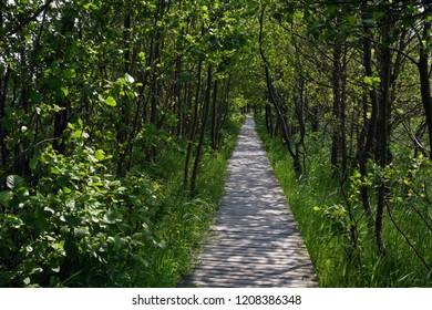 Wooden boardwalk between trees