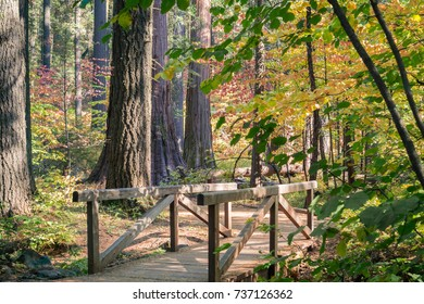 Wooden boardwalk and bridge through an evergreen forest painted in fall colors, Calaveras Big Trees State Park, California
