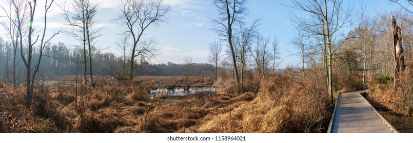 A wooden boardwalk carves a path through a barren wetland full of bare trees and brush in a Virginia wetland.