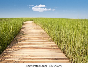 Wooden boardwalk creates path through field of tall green grass leading to blue sky and puffy white cloud - horizontal