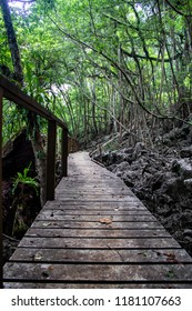 A wooden boardwalk disappears into a deep jungle