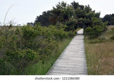 Wooden boardwalk in dunes