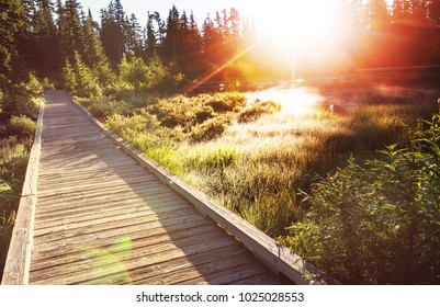 Wooden boardwalk in the forest