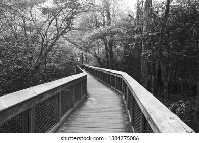 A Wooden Boardwalk in the Forest