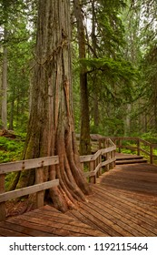 Wooden boardwalk in Mt Revelstoke National Park, British Columbia, Canada
