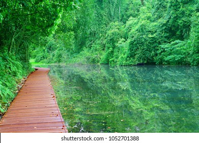 Wooden boardwalk on the lake at MacRitchie Reservoir Singapore