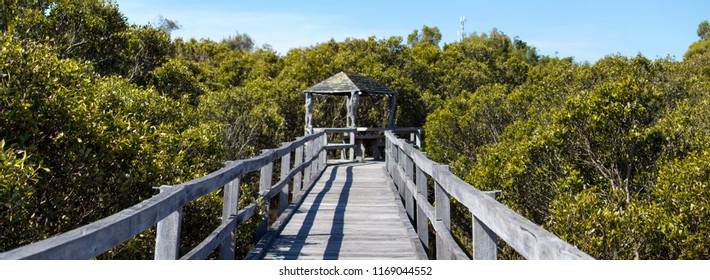 Wooden boardwalk over the rare white mangrove colony  at Leschenault Peninsula  Mangrove reserve , Bunbury, Western Australia on a sunny morning in early spring.