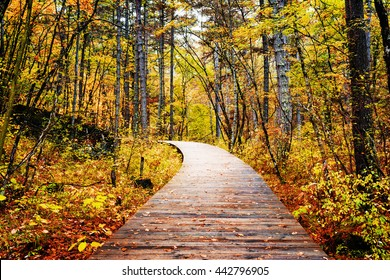 Wooden boardwalk through autumn forest in Jiuzhaigou nature reserve (Jiuzhai Valley National Park) of Sichuan province, China. Yellow and red trees in fall woods. Beautiful landscape.