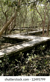 Wooden boardwalk traversing through the mangroves
